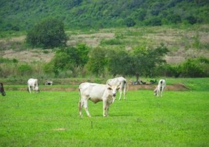 Agro sustentável contribui para o Brasil antecipar metas de redução de emissão de CO2
