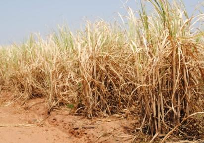 Estado de SP fica sem chuvas até 22-09, prevê Centro de Meteorologia