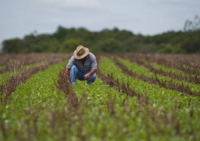 País terá política para aumentar participação no mercado agrícola internacional